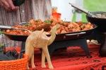 mishmish-curry